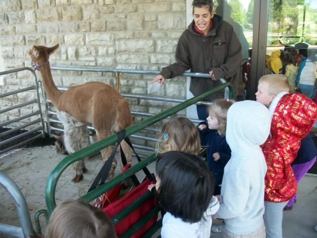 Petting Zoo 3
