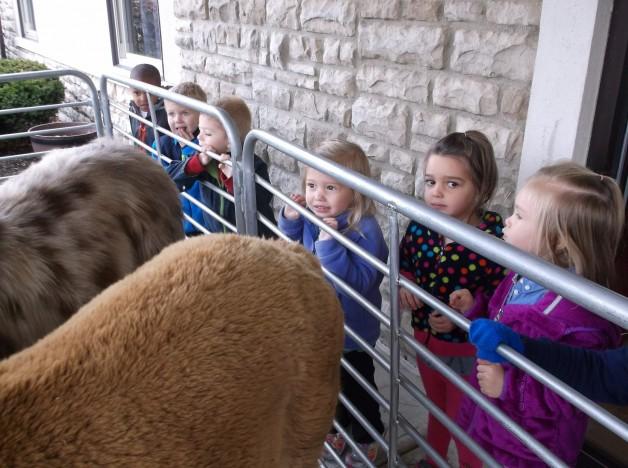 Petting Zoo 2014